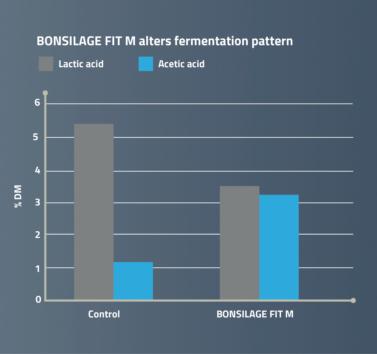 BONSILAGE FIT M alters fermentation pattern