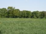 Grünlandfläche