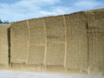 Maize silage