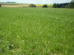 Timing grassland cuts