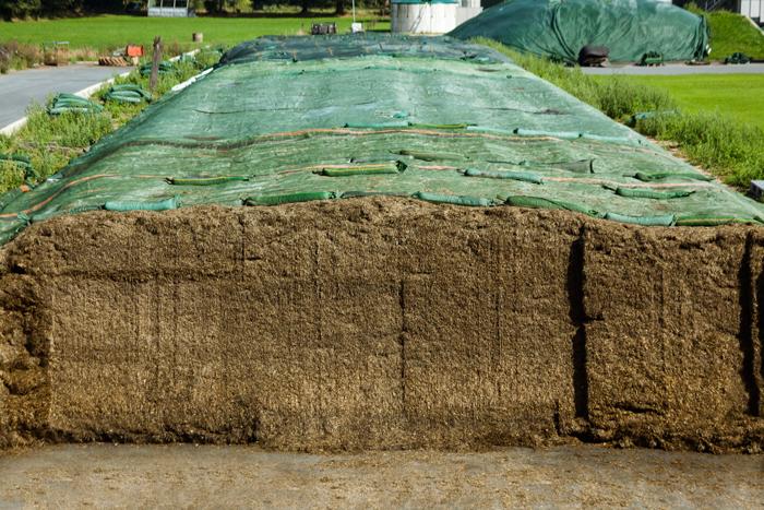 Anschnittfläche eines Grassilagesilos