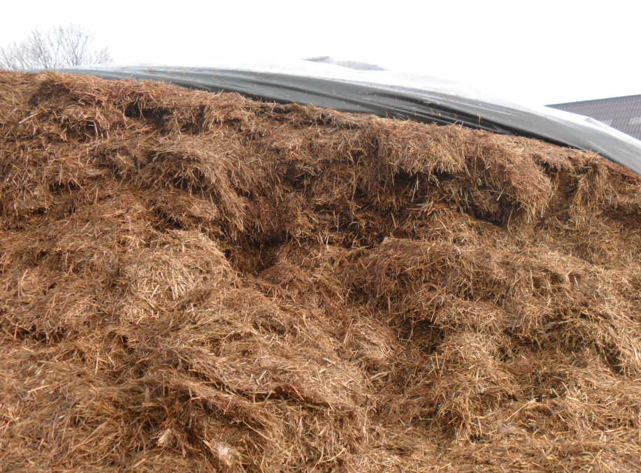 Grass silage with moulds